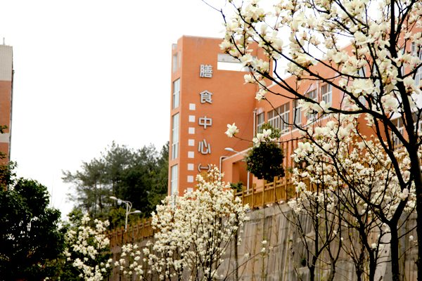 绵阳南山中学实验学校->学校风景->校园风景(22)